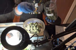 Buying marijuana in Colorado is an ordinary and legal transaction