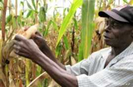 Experts See Commodity Exchanges Key to African Revolution