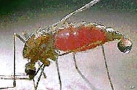 Pharmaceutical Giant Shares Research to Boost Malaria Fight