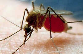 Promising Target For Malaria Vaccine Identified