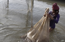 Laos Plans New Study on Dam Effects