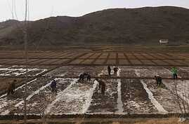 People work in a field outside of Kaesong, North Korea, Ap