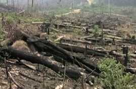 Illegal Logging Down by One Quarter Worldwide