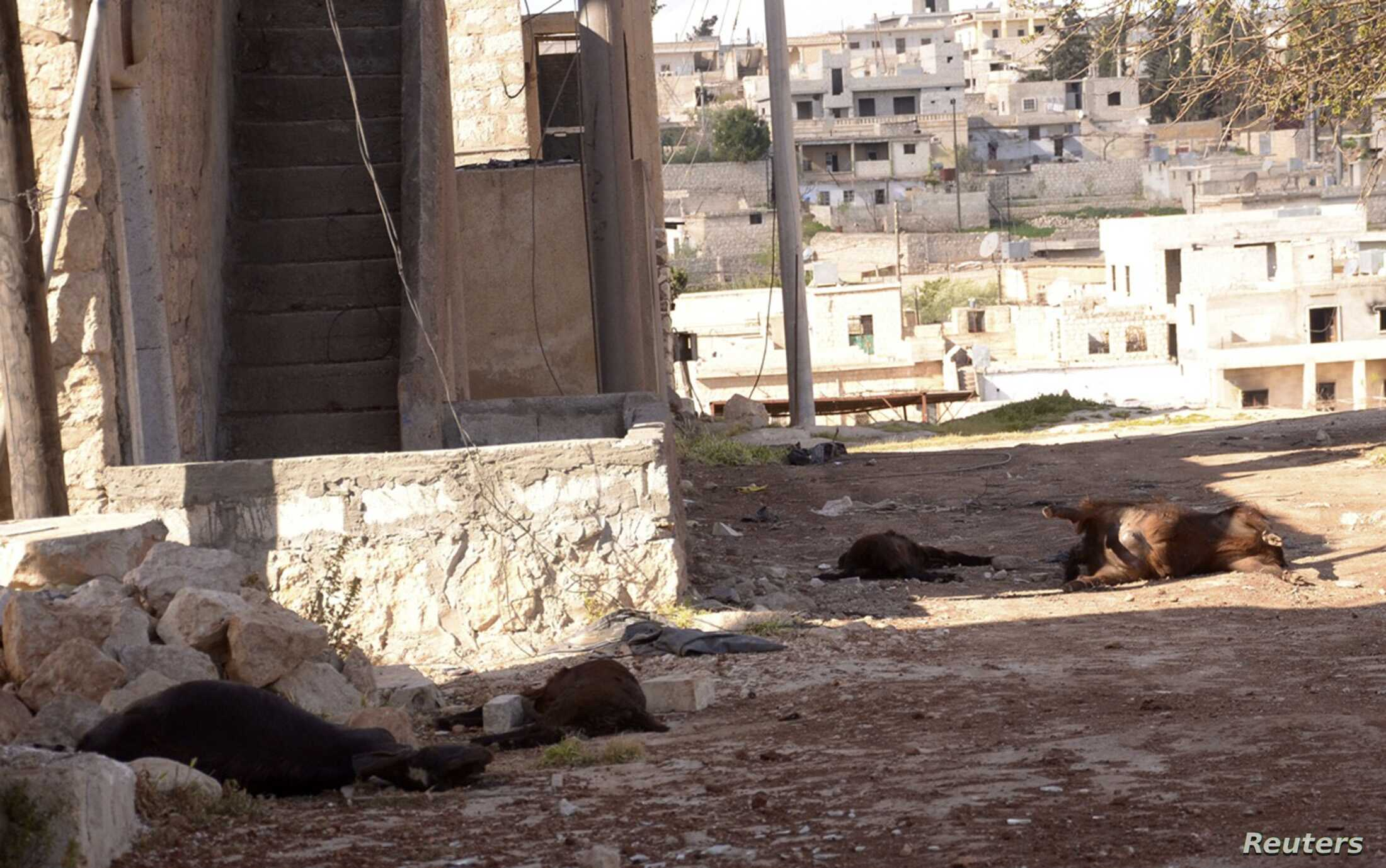 Animal carcasses in wake of what residents describe as a chemical weapons attack in Khan al-Assal area, near Aleppo, Syria, March 23, 2013.