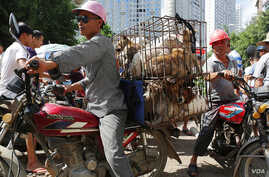 FILE - Dogs jumbled in cages are on the way to the market, Yulin, China.
