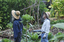 FILE - Organic farmers Steve Mann (l) and Clear Englebert (r) wear mosquito netting while surveying the grounds on their Old Ways Farm in Captain Cook, Hawaii, Feb. 17, 2016.