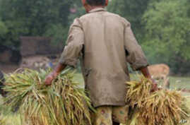 Urgent Measures Needed on Food Prices in Asia, Warns UN