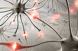 Developing countries bear most of the world's epilepsy burden. (WHO)