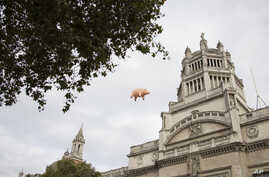 An inflatable flying pig flies above the Victoria & Albert museum in west London, Aug. 31, 2016. Inflatable flying pigs were one of the staple props of the Pink Floyd's live shows.