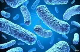 Multi-drug-resistant tuberculosis bacteria. (Credit: U.S. Centers for Disease Control and Prevention)