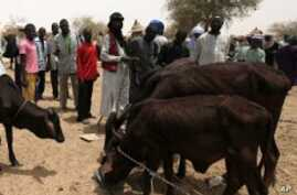 Better Drought Surveillance Improves Aid Delivery in Niger