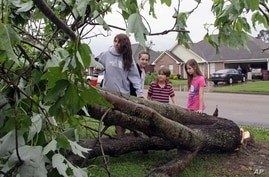Deanna Locke, 17, and her siblings including, from left, Charlotte, Drew, and Trinity examine a downed tree across the street from their home in Tupelo, Mississippi, after a suspected tornado moved through town, April 28, 2014.