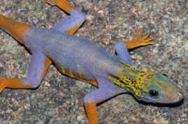 208 New Species Discovered in Southeast Asia