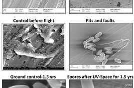 Electron micrographs of Bacillus pumilus SAFR-032 spores on aluminum before and after exposure to space conditions.