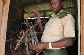 Tom Okello in the shed where the Uganda Wildlife Authority keeps snares it has found, Nov. 2, 2013. (Hilary Heuler for VOA)