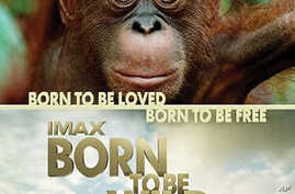Documentary 'Born To Be Wild' Spotlights Orphan Wildlife Projects