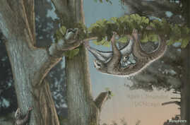 An artist's depiction of a mother and baby Maiopatagium suspended in roosting posture climbing a tree trunk in Jurassic forest, is shown in this July 31, 2017, handout photo.