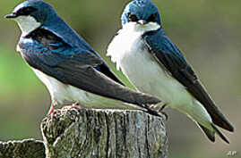 Many common backyard birds nest across North America and migrate through the Gulf of Mexico.