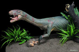 A replica of the new species Teleocrater rhadinus, a close relative of dinosaurs, is seen preying on a juvenile cynodont, a distant relative of mammals, is shown in this handout photo provided April 12, 2017, by Museo Argentino de Ciencias Naturales