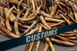 FILE - Ivory tusks seized by Hong Kong Customs are displayed at a news conference in Hong Kong, China, July 6, 2017.