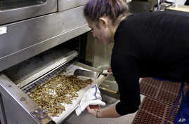 Genevieve Gladson Rainville turns over meal worms as she bakes them in an oven, Feb. 18, 2015, in San Francisco, California.