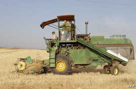 Syrian farmers collect crops in a field in Daraa, 100 kms south of Damascus, on June 5, 2010.