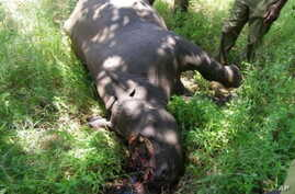A rhino killed for its horn lies dead in a South African game reserve … Conservationists say if they build good relationships with communities living in or near game reserves, it could decrease incidents of poaching, as poachers often get information
