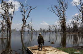 A park ranger surveys damage caused by flooding at Lake Nakuru National Park, Kenya, August 18, 2015. The Park is home to some of the world's most majestic wildlife including lions, rhinos, zebras and flamingos.
