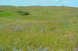 Delicate flowers pop up in the Kansas tallgrass prairie. (US Fish and Wildlife Service)
