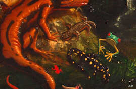 A detail from Alexis Rockman's first panoramic painting, 'Evolution,' (1992) shows a small sampling of the animals he depicts.