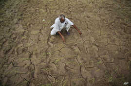 An farmer shows a dry, cracked paddy field in Ranbir Singh Pura 34 kilometers from Jammu, India, Friday, Aug. 3, 2012.