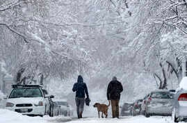 A couple walks their dog beneath snow-covered trees during a nor'easter, March 8, 2018, in Portland, Maine.
