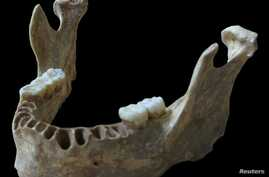 A jawbone unearthed in Romania of a man who lived about 40,000 years ago is shown in this handout photo provided by Max Planck Institute for Evolutionary Anthropology in Leipzig, Germany, June 21, 2015.
