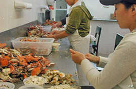 The Maryland crab industry relies heavily on guest workers from Mexico.