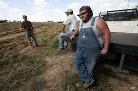 After stringent state immigration laws took effect, sweet potato farmer Casey Smith, right, is short on temporary laborers, Cullman, Ala., Sept. 29, 2011.