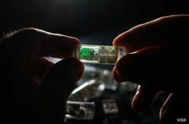 MIT engineers have designed an ingestible sensor with bacteria programmed to sense environmental conditions and relay the information to an electronic circuit. (Photo courtesy of Lillie Paquette, MIT)