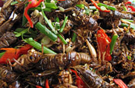FAO: Bugs Take a Bite Out of Hunger