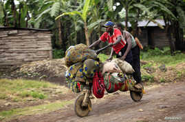 People ride with their belongings on a wooden bicycle as they flee from renewed fighting between Congolese army and M23 rebels near the eastern Congolese city of Goma, July 24, 2012.