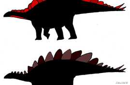 Illustrations of Stegosaurus with wide plates and tall plates are seen in a handout image from Evan Saitta, a student at Britain's University of Bristol.