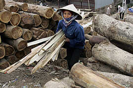 Environmental Group Links Vietnam's Military to Laos Timber Smuggling