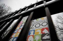 The gate of the closed Smithsonian's National Zoo is seen, Jan. 2, 2019, in Washington.