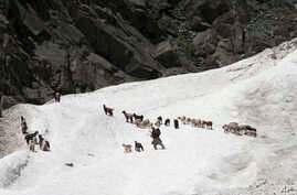 FILE - Kashmiri nomad tends to his heard of sheep and goats as he crosses a glacier near Dubgan, 70 kilometers (43 miles) south of Srinagar, India, May 20, 2015.
