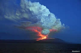 The Wolf volcano spews smoke and lava on Isabela Island in Galapagos National Park, May 25, 2015.