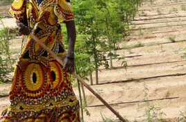 FANRPAN says women, such as this farmer in Niger, do most of the agricultural work in Africa