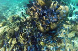 A large school of tropical fish spent some time swimming with Mikah.