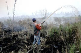 Worker attempts to contain a wildfire razing peatland field in Pedamaran, South Sumatra, Indonesia, Oct. 27, 2015.