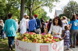 Members of an interfaith group that sponsored Unity Walk 2017 in the U.S. capital prepared apples for marchers in the annual peaceful demonstration for peace and tolerance on Sunday 09/10/17. (B. Bradford/VOA)