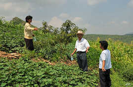 North Korean farmers are planting fruit and nut trees on hillsides to produce food and prevent erosion.