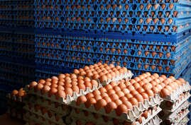 Eggs are packed to be sold at a poultry farm in Wortel near Antwerp, Belgium August 8, 2017.