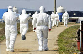 FILE - Health officials in protective suites arrive at a poultry farm where the bird flu virus was found in Jeongeup, South Korea, April 8, 2008.